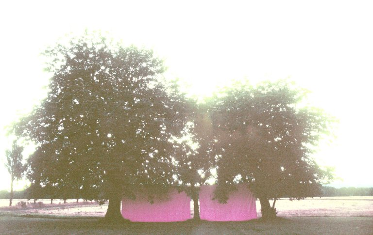 'Energy Field' 1999- 2002 by artist Wendy Hardie. Two walls of pink fabric drawn tight between 3 Chestnut trees. Sited on the farm Hardie grew up on these trees were planted by her grandfather and his two brothers.